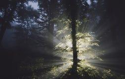 Magische boom in geheimzinnig bos bij nacht stock afbeeldingen