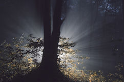 Magische boom in geheimzinnig bos op Halloween-nacht stock foto's