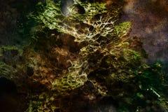 Magische Boom Lungwort Royalty-vrije Stock Afbeeldingen