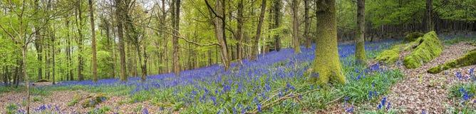 Magische bos en wilde klokjebloemen royalty-vrije stock afbeeldingen