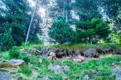 Magische bosdiversiteit van installaties, bomen en stenen Royalty-vrije Stock Foto's