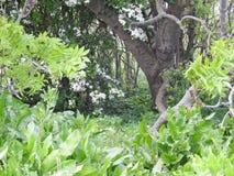 Magische boskreupelbosjegeheim verrukte tuin royalty-vrije stock afbeeldingen