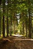 Magische bosweg Stock Foto's