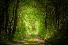 Magische bosweg Stock Afbeeldingen