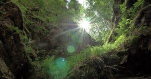 Magische canion dichtbij een bergrivier stock videobeelden