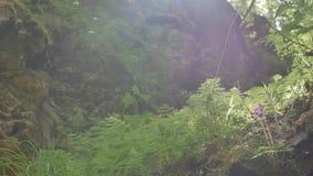 Magische canion dichtbij een bergrivier stock footage