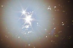 Magische dageraad in bos Stock Foto