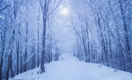 Magische de winter bosweg Stock Foto's