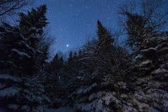 Magische de winternacht Royalty-vrije Stock Afbeeldingen