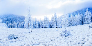 Magische de wintersneeuw behandelde boom De schoonheid van de wereld carpathians ukraine europa stock afbeelding