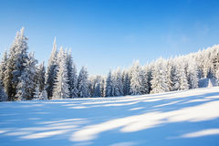 Magische die bomen met witte sneeuw worden behandeld Stock Fotografie