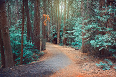 Magische dromerige bosachtergrond Royalty-vrije Stock Afbeeldingen