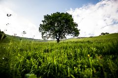 Magische eenzame boom in een berghelling met groen gras rond en een bewolkte hemel stock afbeelding