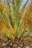 Magische Farben des Palmeabschlusses oben stockbild