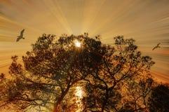 Magische gouden avonden met overzeese mening stock foto's