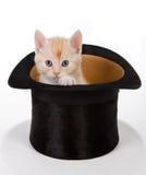 Magische kat Stock Foto's