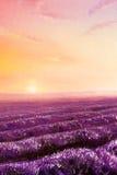 Magische lavendelgebieden bij dageraad, olieverfschilderij op canvas royalty-vrije illustratie