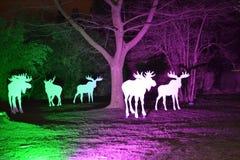 Magische lichten in Gruga-Park, Duitsland Royalty-vrije Stock Foto's