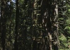 Magische Lichter, die im mysteriösen Wald nachts funkeln stockbilder