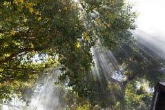 Magische Lichtstralen royalty-vrije stock afbeeldingen