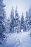 magische Nacht von Weihnachten Stockfotografie