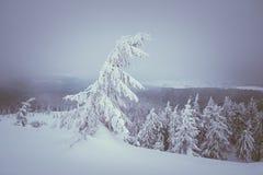 magische Nacht von Weihnachten Lizenzfreie Stockfotos