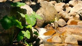 Magische rivier met rotsen Snelle rotsachtige duidelijke kristalstroom met stroomversnelling Stoom met cascades Plonsen van dalen stock videobeelden