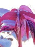 Magische Rose Leaves stock foto