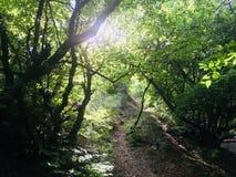 Magische schaduwen in het bos royalty-vrije stock fotografie