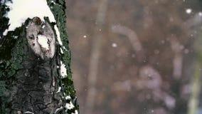Magische sneeuwvliegen omhoog zoals as stock footage