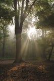 Magische Sonnenstrahlen durch nebelhaften Wald Lizenzfreies Stockfoto