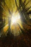 Magische Sonnenstrahlen im gelben Wald Stockbild