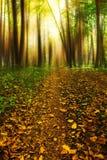 Magische Straße im Wald mit getrockneten Blättern und mysteriösen Bäumen Stockfotografie