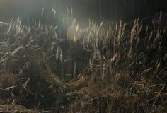 Magische Strahlen der versteckenden Sonne lizenzfreie stockbilder