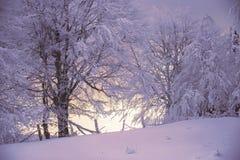 Magische Szene des Winters auf einem Berg in Rumänien Stockfotografie