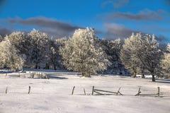 Magische Szene des Winters auf einem Berg in Rumänien Lizenzfreies Stockfoto