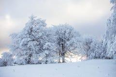 Magische Szene des Winters auf einem Berg in Rumänien Stockbilder