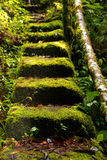 Magische Treppe Stockfotos