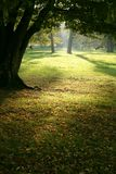 Magische Waldleuchte Stockfoto