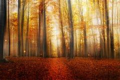 Magische Weg in Autumn Forest Royalty-vrije Stock Afbeelding