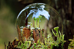 Magische Welt des Makromooses Stockbilder