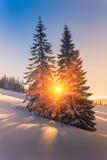Magische Winterlandschaft in den Bergen Ansicht von schneebedeckten Nadelbaumbäumen und -schneeflocken bei Sonnenaufgang Lizenzfreie Stockfotos