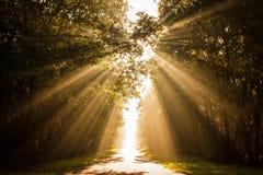 Magische zonnestralen royalty-vrije stock foto's