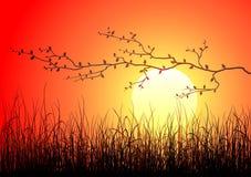 Magische zonsondergang vector illustratie