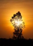 Magische zonsondergang met boom Stock Foto