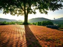 Magische zonsopgang met eenzaam boomsilhouet op open gebied bij zon Royalty-vrije Stock Afbeelding