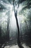 Magische zonstralen in surreal bos met mist stock afbeeldingen