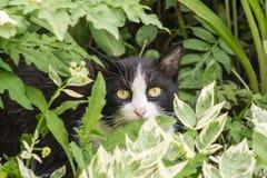 Magische zwart-witte kat met groene ogen die in heldergroen gras zitten Royalty-vrije Stock Afbeelding