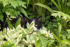 Magische zwart-witte kat met groene ogen die in heldergroen gras zitten stock afbeelding
