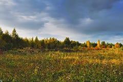 Magischer Autumn Forrest Colorful Fall Leaves romantischer Hintergrund lizenzfreie stockfotografie
